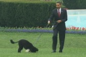 Presidential campaign goes to the dogs