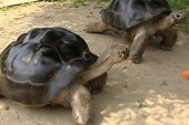 Time out for turtles