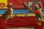Kangaroo has moves like Rocky