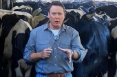 Dairy farmers struggle to feed cows amid...