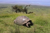 Undoing the damage to the Galapagos