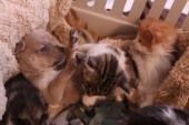 Orphaned puppy gets 'adopted' by cat family