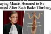 RGB gets her own mantis