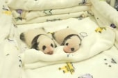 Baby panda twins make debut in China