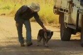#GoodNewsRuhles: Hero family dog saves missing Australian toddler