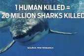 How killing sharks affects marine life