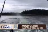 Killer whale tosses poor sea lion