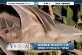 The bat factor: Origins of Ebola
