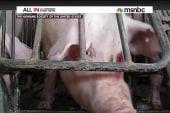 Chris Christie's pig problem