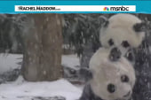Because panda cub in the snow