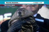 Groundhogs speak! (Tetanus shots all around)