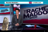 Disapproving Barred Owl returns to Maddow