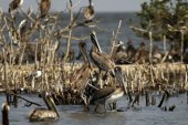 The Gulf today: Wildlife sanctuary disappears