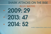 Shark attacks increasing annually