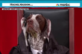 'Supreme Court dogs' ready for the spotlight
