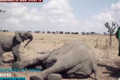 The rush to save baby elephants in Kenya