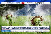 'Pollen tsunamis' slam the Northeast