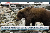 Animals dying out amidst California drought