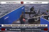 Great White Shark heads up the East Coast