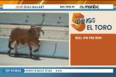 5 Things: El toro