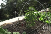 How to grow greener marijuana?