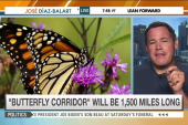 'Corridor' aims to save monarch butterflies