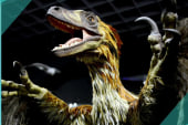 New science shows dinosaurs had feathers