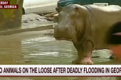 Zoo animals on the loose after flooding