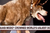 Judges crown world's ugliest dog
