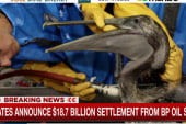States announce BP oil spill settlement