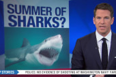More shark attacks heighten public fear