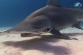 Coming face-to-face with a shark