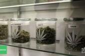 Medical marijuana collective faces extinction