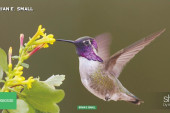 Hummingbird trouble? There's a hotline for...