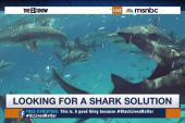 Looking for a shark solution