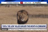 American accused of killing beloved lion