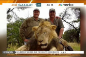 Calls for justice emerge for Cecil the lion