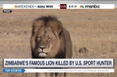 Lion's death turns focus to big-game hunting