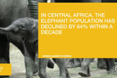 Could elephants become extinct in near...