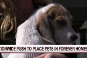 Nationwide push to place pets in forever...