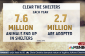 'Clear the Shelters day' no pet left behind