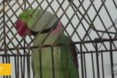 Police arrest parrot for foul language