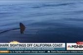 Shark sightings shut down California beach
