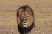 Inside Africa's 'canned hunting' industry