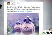 #BrusselsLockdown cat memes go viral