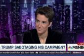 Even Rachel Maddow doesn't understand Trump
