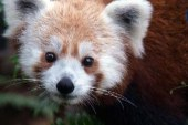 Top Lines: Red Panda, Snowden, Kerry, ...