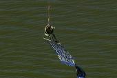 Protester swings from New York bridge