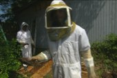 Millions of bees are dying