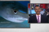 Shark attack survivors out to defend their...